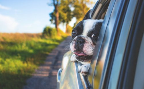 Home Security for Pet Owners
