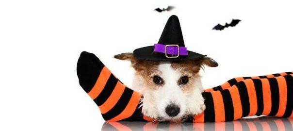HalloweenPetSafety